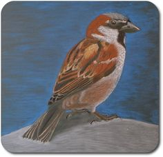 Waldorf ~ 4th grade ~ Human & Animal ~  Bird ~ chalkboard drawing