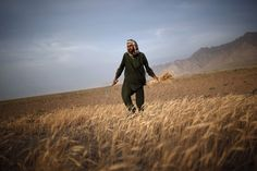 Photos of the day - July 23, 2015An Afghan man harvests wheat on the outskirts of Kabul, Afghanistan July 23, 2015. (REUTERS/Ahmad Masood)See more photos of the day and our other slideshows on Yahoo News.