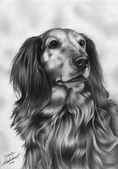 "Entitled simply ""small dog"", this lovely pencil-drawn image is by artist Mikael Ålund. It reminds me of a long haired mini doxie, which may or may not have to do with the fact that I have two beautiful short haired black and tan doxies myself.    small dog by Mikael Ålund, via DeviantArt: http://regius.deviantart.com/gallery/?offset=0#/d2ivzdl"