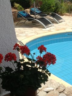 Vibrant coloured geraniums by the pool.