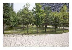 Landscape And Urbanism, Forest Landscape, Garden Landscape Design, Urban Landscape, Indoor Garden, Indoor Outdoor, Parks, Lake Garden, Pocket Park