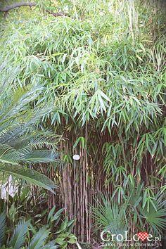 Bambus - Roślinność w Arboretum Trsteno || http://crolove.pl/arboretum-w-trsteno/ || #Arboretum #Trsteno #Croatia #Chorwacja #Hrvatska #Garden #Travel #Summer