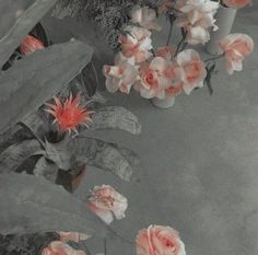 Aesthetic Colors, Aesthetic Images, White Aesthetic, Aesthetic Grunge, Aesthetic Backgrounds, Aesthetic Vintage, Aesthetic Photo, Aesthetic Wallpapers, Aesthetic Pastel