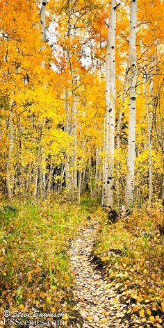 A Walk Through the Aspens Woods Lake, Uncompahgre Wilderness (Telluride, Colorado) Landscape Photography Tips, Tree Photography, Amazing Photography, Photography Business, Digital Photography, Photography Aesthetic, Photography Classes, Iphone Photography, Aerial Photography