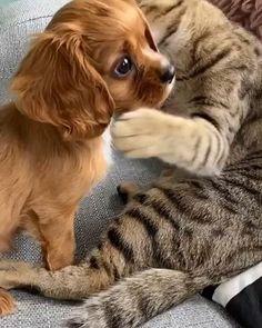 Too cute - Lustiges tier - Perros Graciosos Cute Animal Videos, Cute Animal Pictures, Cute Videos, Baby Animals Pictures, Cute Little Animals, Cute Funny Animals, Funny Cats, Tier Fotos, Cute Creatures