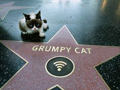 Tardar Sauce a.k.a. Grumpy Cat: They gave me my own star on the Hollywood Walk of Fame… *Yawn*