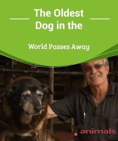 The Oldest Dog in the World Passes Away  Even if we wanted our precious four-legged friends to be with us forever, it's a fact that dogs live for around 15 years at most. And even if an improvement in quality of life can make both humans and pets live longer, it is still surprising to find out that a dog, for example, has lived for more than two decades.