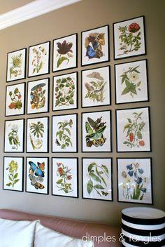 but with botanical BIRD prints...botanical gallery wall