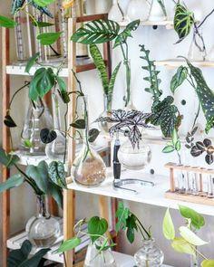 Plant Wall Decor, House Plants Decor, Cactus Decor, Plants In Bottles, Garden Terrarium, Plant Shelves, Style Retro, Plant Illustration, Hydroponic Gardening