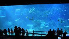 Marine Life Park in Singapore, travel photos of Marine Life Park | Hellotravel