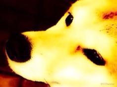 Tokyo Dog Ⅰ