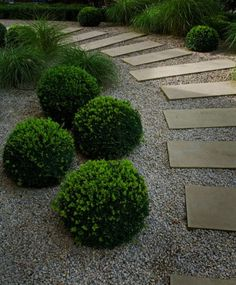 Formal Tailored Gardens   Boxwood spheres randomly placed in minimal on