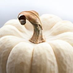 Photo of White Pumpkin with Autumn Leaf  - Autumn's Tenderness by Carla Dyck