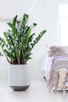 Die perfekte Ergänzung zu deinem Schlafzimmer, denn Pflanzen reinigen die Luft von Schadstoffen und befeuchten sie gleichzeitig.