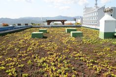 green roof,living roof, rooftop garden
