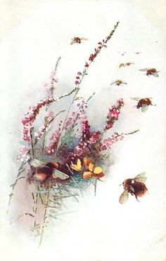 many bees fly right of puple flowers(/lavender), one bee lands