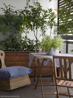 Rosliny Na Balkon I Taras Wybor I Pielegnacja Roslin W Pojemnikach Outdoor Furniture Sets Outdoor Decor Home And Garden