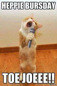 Happy birthday animals, happy birthday video, birthday wishes funny, birthday songs, singing Happy Birthday Animals, Happy Birthday Video, Singing Happy Birthday, Happy Birthday Quotes, Birthday Posts, Cat Birthday, Animal Birthday, Birthday Memes, Funny Wishes