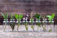 Alcune erbe sono benefiche per la salute, hanno proprietà rilassanti e sono fondamentali nella preparazione di alcune ricette culinarie: per tutti questi motivi sarebbe comodo averle sempre a portata…