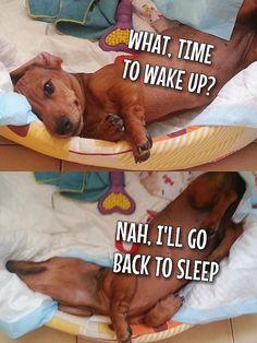 lala-mizu:  I swear my dog sleeps in the weirdest positions.