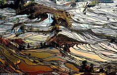 terrazas de arrozales en Yunnan,China