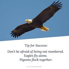 Don't be afraid of being out numbered. Eagles fly alone. Pigeons flock together. Open Secrets, Life Motto, Dont Be Afraid, Flocking, Pigeon, Eagles, Success, Motto, Eagle