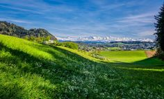 Springtime is Here! Spring Time, Switzerland, Golf Courses