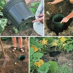Watering through a pot in the ground Garden Crafts, Garden Projects, Container Gardening, Gardening Tips, Backyard Hill Landscaping, Vertical Garden Diy, Garden Planning, Vegetable Garden, House Plants