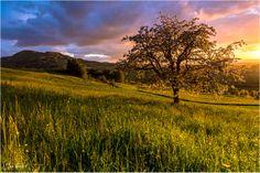 Beautiful Spring by Jan Geerk on 500px