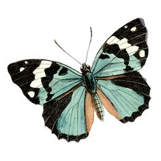 Бабочки. PNG.: ♥ Creative NN. Блог Альбины Рассеиной. ♥