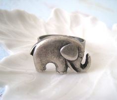 Elephants ring, so obsessed