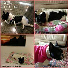 Sophia ama os produtos MILLIE: COLEIRA PEITORAL CAMBRIDGE CAMA LONDON PRIMAVERA COLCHONETE MAT PRIMAVERA CAPA POLAR FLEECE Seu Pet merece MILLIE: www.millie.com.br