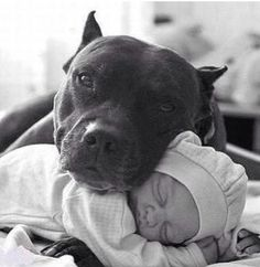 Baby picture with the dog of the house