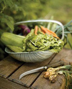 basket of freshly harvested summer vegetables