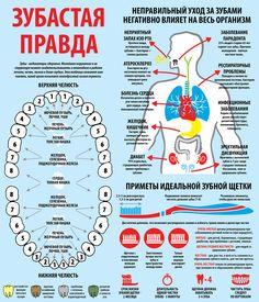 Инфографика. Зубы. Гигиена. Уход за зубами