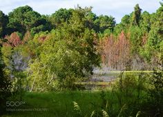 Red & Green Trees with white birds by MarkCWilson