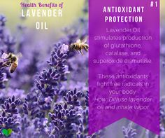 antioxidants in essential oil - find more uses for #lavender #oil here: http://everyhomeremedy.com/what-is-lavender-oil-good-for/