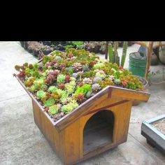Green roof dog house.
