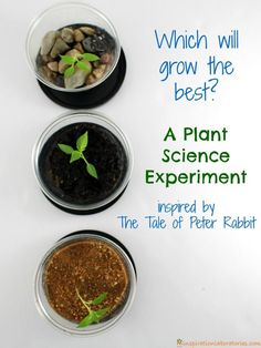 Science Experiment Inspired by Peter Rabbit Which plant will grow the best? Try this plant science experiment inspired by The Tale of Peter RabbitWhich plant will grow the best? Try this plant science experiment inspired by The Tale of Peter Rabbit Plant Experiments, Science Experiments Kids, Science Lessons, Science For Kids, Science Activities, Plant Science Fair Projects, Earth Science, Science Daily, Spring Activities