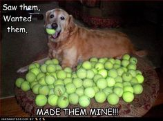 our old Jack Russell was freaky over tennis balls...FREAKY...he would have totally pulled this stunt
