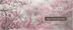 Accesorii pentru Femei Blog, Atelier, Blogging