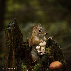 squirrel in mushrooms