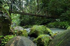 La Selva Biological Station Laselvacr Profile Pinterest