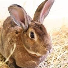 Rusty is looking for a home with his gorgeous girlfriend Dusty. They are lovely rabbits once they get to know you. They are looking for their new home to have a large hutch or shed with a 10ft by 5ft run attached to it. If you think you can offer this gorgeous pair a loving home please contact the Godmanchester Shelter.