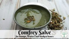 Comfrey known as one of the herbs to heal broken bones. This comfrey salve is a must have for your home herbal apothecary. The Homesteading Hippy