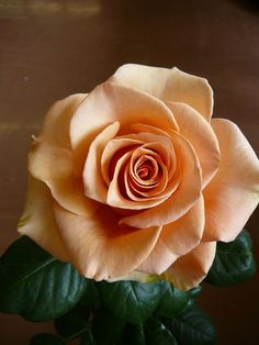 Have you ever seen 60 different colors of roses