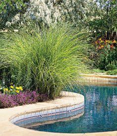 grass plantings around pool - Google Search