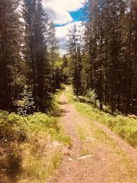 solemskogen – Google Søk Country Roads, Google