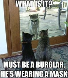 Must be a burglar!  At Orchard Lake Pet Resort we strive to provide the best overnight care and grooming services for our canine clients!  Call (248) 372-7000 or visit our website www.orchardlakepetresort.com for more information about the services we provide!