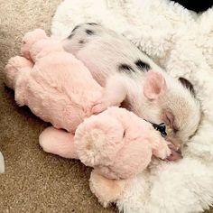 Cute Baby Pigs, Baby Animals Super Cute, Baby Farm Animals, Cute Piglets, Baby Animals Pictures, Cute Animal Photos, Cute Little Animals, Cute Funny Animals, Cutest Animals
